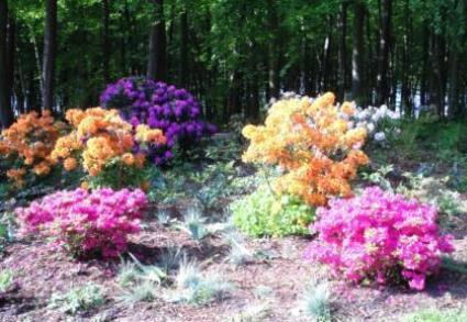 Wunderschöner Rhododendron. Foto: Eckart Kreitlow