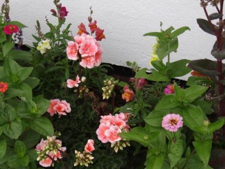 Schöne Blumen. Foto: Eckart Kreitlow