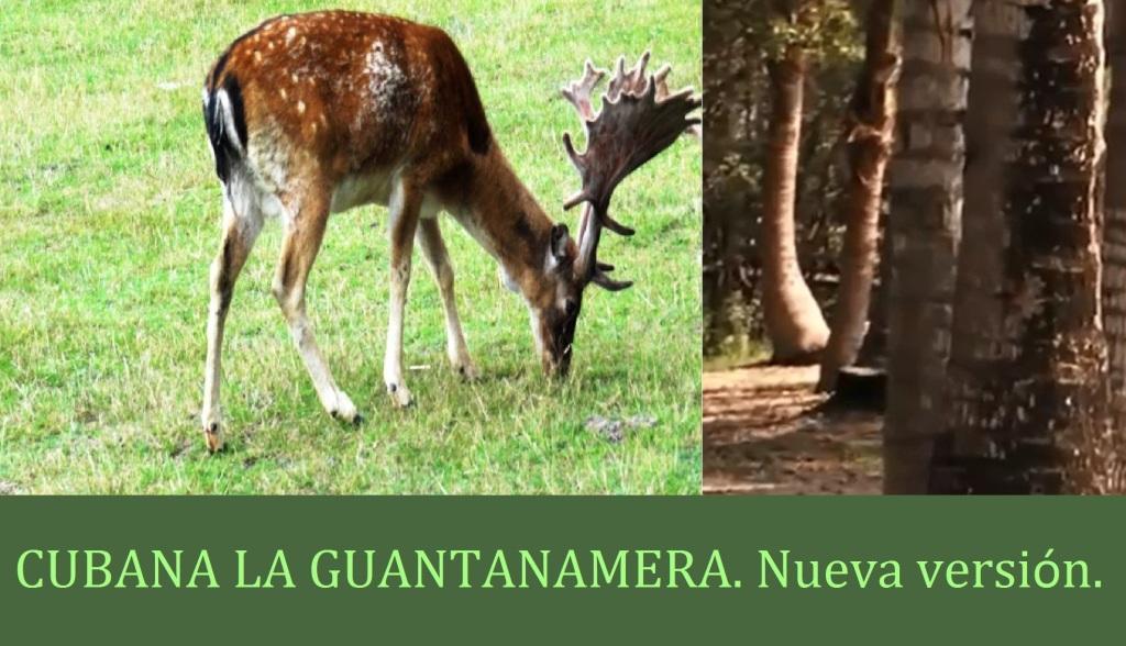 CUBANA LA GUANTANAMERA. Nueva versión.