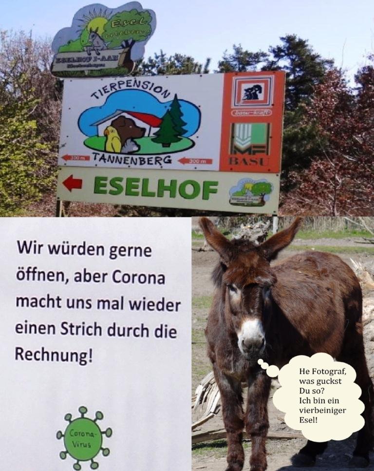 Der Eselhof I-AAH Klockenhagen befindet sich im Ortsteil Klockenhagen der Bernsteinstadt Ribnitz-Damgarten im Landkreis Vorpommern-Rügen - Zurzeit ist er geschlossen -  Am Eingang des Eselhofs I-AAH Klockenhagen, Am Tannenberg 7, 18311 Ribnitz-Damgarten befindet sich dort am Eingangstor ein Schreiben mit der Aufschrift:  'Wir würden gerne öffnen, aber Corona macht uns mal wieder einen Strich durch die Rechnung!' - Einer der fotografierten Esel schaute mich beim Fotografieren so an, als würde er sagen wollen, wenn er sprechen könnte: ' He Fotograf, was gucktst Du so? Ich bin ein vierbeiniger Esel!' - Wahrscheinlich hielt er mich für einen zweibeinigen Esel? Na ja, der Esel hätte sicher nicht ganz unrecht! - Ostsee-Rundschau.de -  Fotos: Eckart Kreitlow