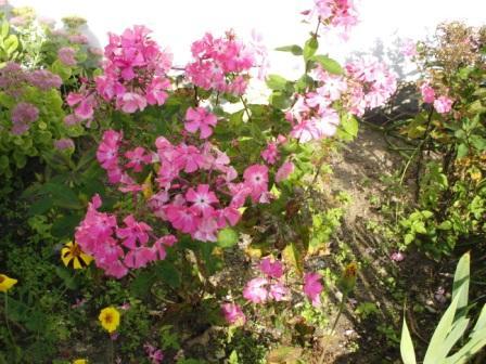 Endlich Frühling! Die Vegetation ergrünt und erblüht. Foto: Eckart Kreitlow