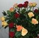 Wunderschöne Rosen. Foto: Eckart Kreitlow