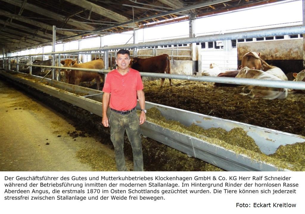 Mitglieder des Landwirtschafts- und Umweltausschusses der Stadtvertretung der Bernsteinstadt Ribnitz-Damgarten hatten am 20. August 2020 die Möglichkeit, an einer Betriebsführung des Geschäftsführers des 100 % biologisch wirtschaftenden Gutes und Mutterkuhbetriebes Klockenhagen Herrn Ralf Schneider (Bildmitte) teilzunehmen. Foto: Eckart Kreitlow