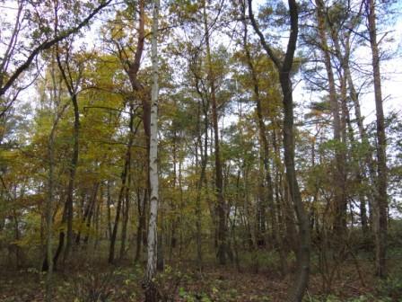 Schöne Herbstbilder. Foto: Eckart Kreitlow