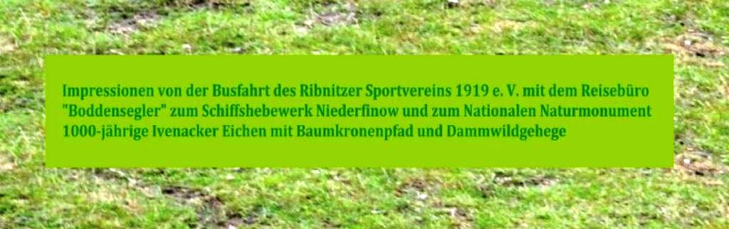 Impressionen von der Busfahrt des Ribnitzer Sportvereins 1919 e.V. mit dem Reisebüro 'Boddensegler' zum Schiffshebewerk Niederfinow und zum Nationalen Naturmonument 1000-jährige Ivenacker Eichen mit Baumkronenpfad und Dammwildgehege in der Nähe der Reuterstadt Stavenhagen am 1. August 2019.