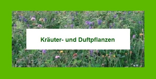 Kräuter- und Duftpflanzen. Foto: Eckart Kreitlow