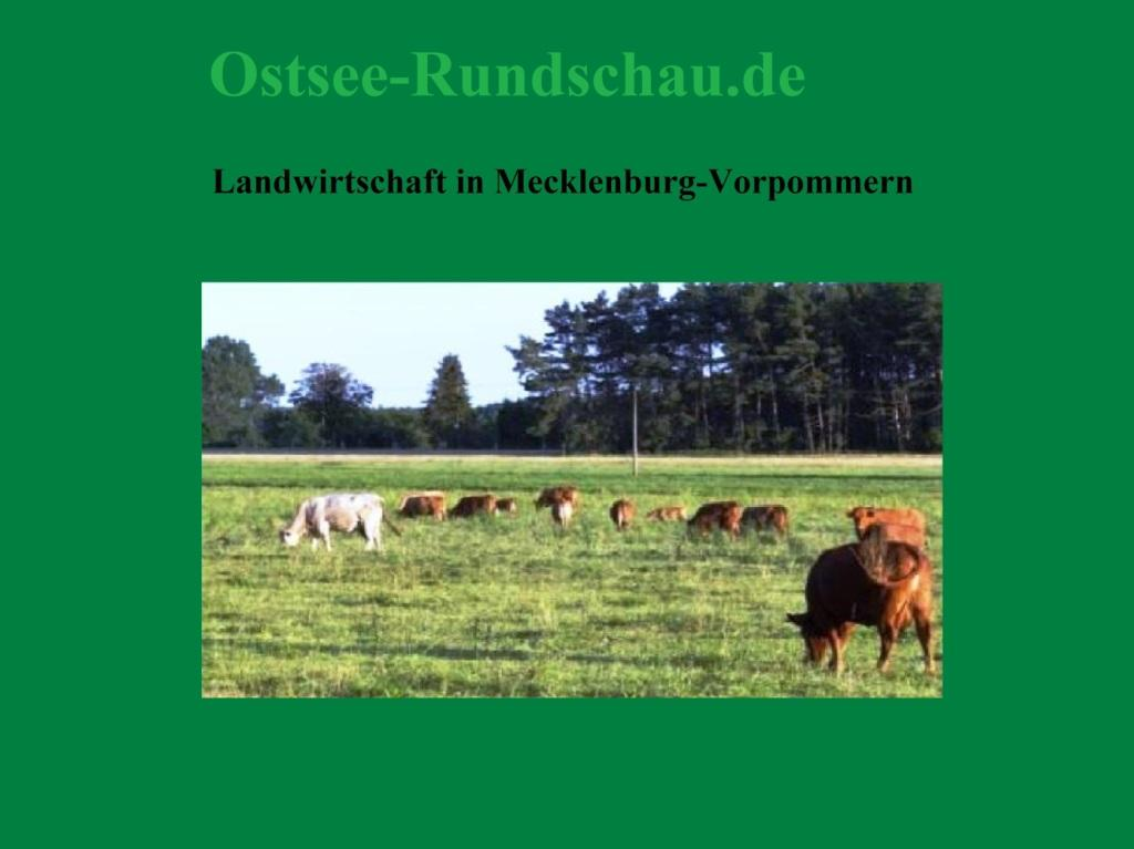 Landwirtschaft in Mecklenburg-Vorpommern - Ostsee-Rundschau.de  - Neue Unabhängige Onlinezeitungen (NUOZ) - vielseitig, informativ und unabhängig - Präsenzen der Kommunikation und der Publizistik mit vielen Fotos und  bunter Vielfalt