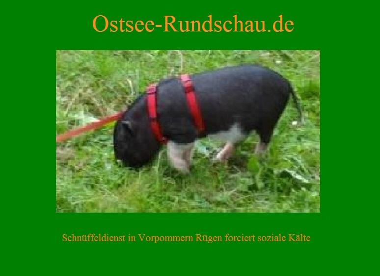 Ein niedliches Minischwein. Foto und Fotobearbeitung: Eckart Kreitlow - Schn�ffeldienst in Vorpommern-R�gen forciert soziale K�lte in unserem Land.