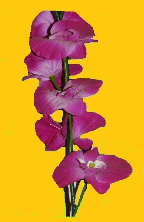 Eine wunderschöne Orchidee.