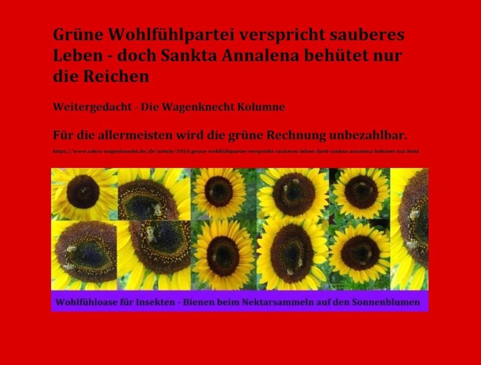 Grüne Wohlfühlpartei verspricht sauberes Leben – doch Sankta Annalena behütet nur die Reichen - Weitergedacht - Die Wagenknecht Kolumne - 05.05.2021 - Link: https://www.sahra-wagenknecht.de/de/article/3050.grüne-wohlfühlpartei-verspricht-sauberes-leben-doch-sankta-annalena-behütet-nur.html - Wohlfühloase für Insekten - Bienen beim Nektarsammeln auf den Sonnenblumen - Fotos und Grafik: Eckart Kreitlow