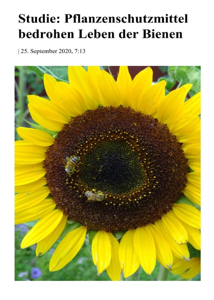 Studie: Pflanzenschutzmittel bedrohen Leben der Bienen - The World News Monitor - Fakten, Analyse, Nachhaltigkeit - 27.09.2020