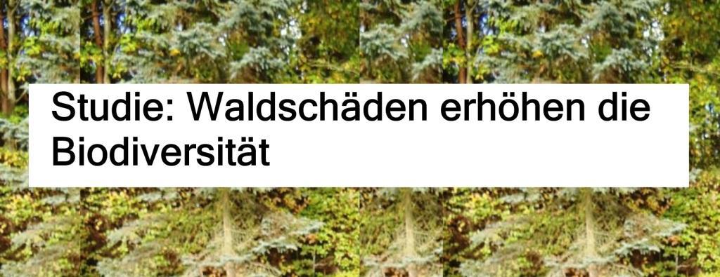 Studie: Waldschäden erhöhen die Biodiversität - The World News Monitor - Fakten, Analyse, Nachhaltigkeit - 16.07.2020