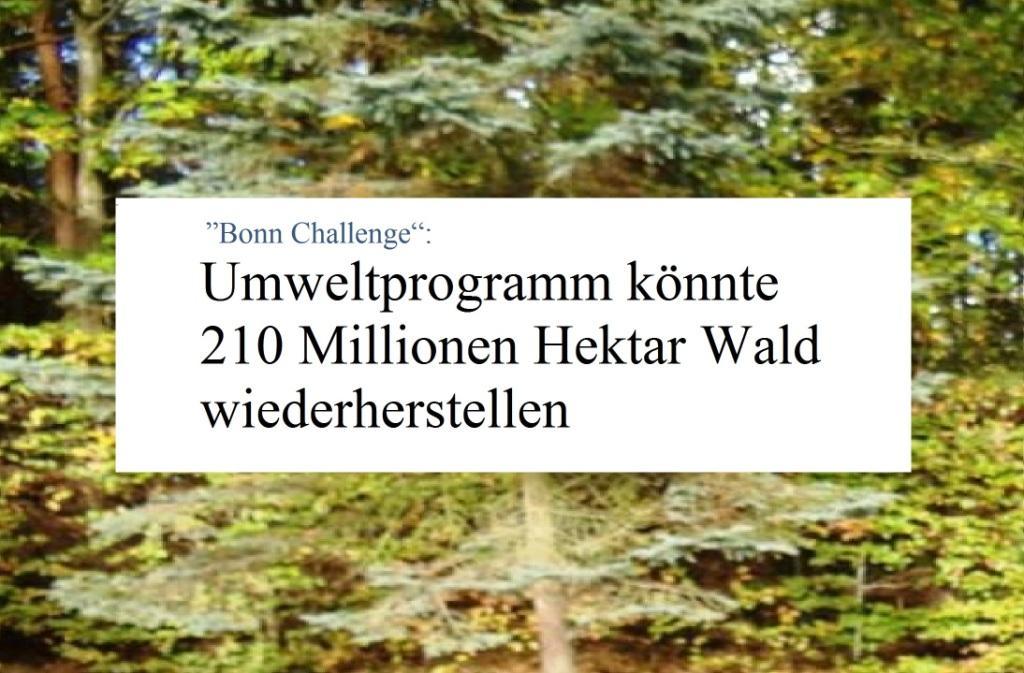 'Bonn Challenge': - Umweltprogramm könnte 210 Millionen Hektar Wald wiederherstellen - Berliner Zeitung - 04.09.2020
