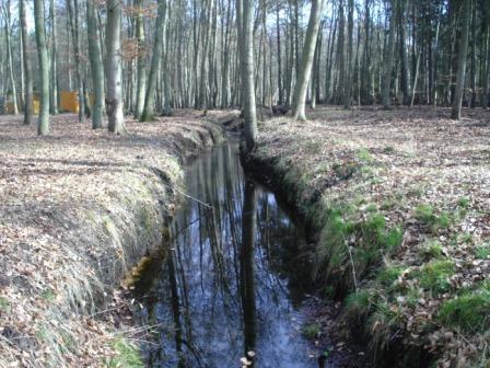 Waldbach inmitten der Rostocker Heide in der Nähe des Ostseebades Graal-Müritz.  Foto: Eckart Kreitlow