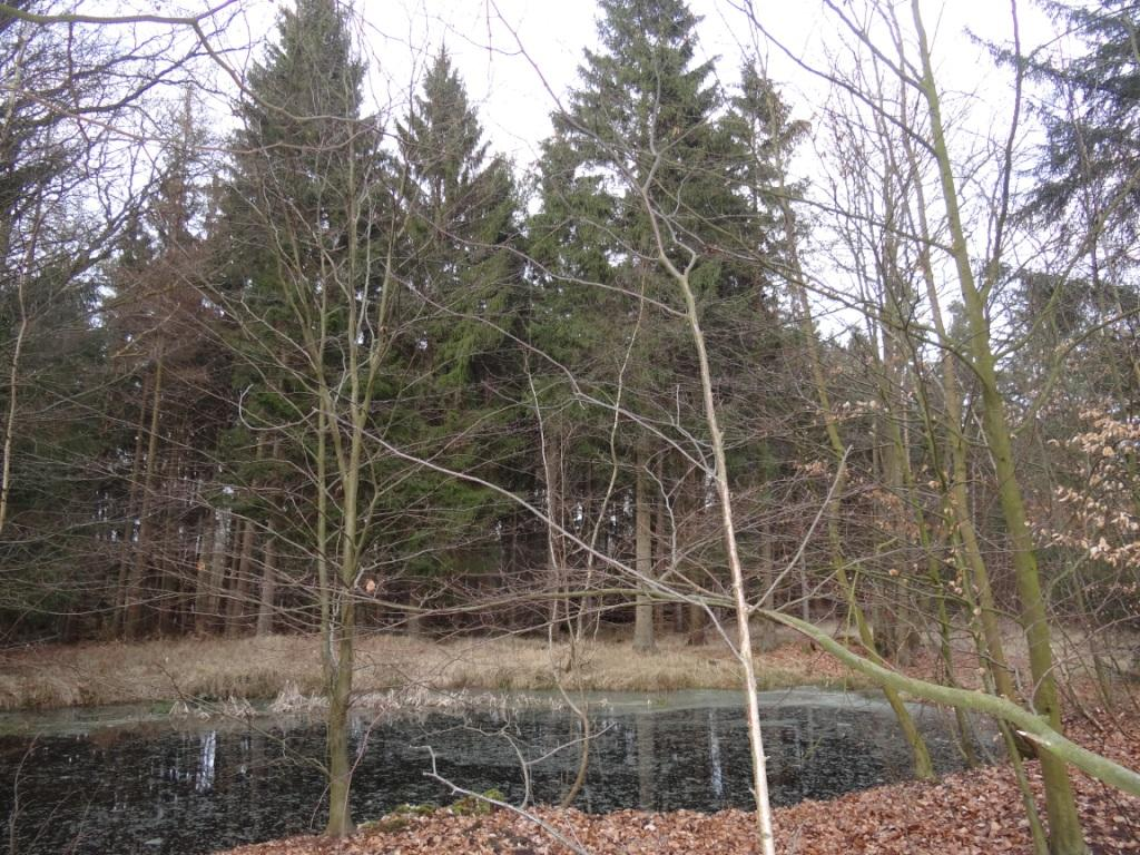 Die Rostocker Heide, ein Wald- und Heidegebiet nordöstlich von Rostock. Blick in ein Waldstück zwischen Gelbensande und Rövershagen. Foto: Eckart Kreitlow