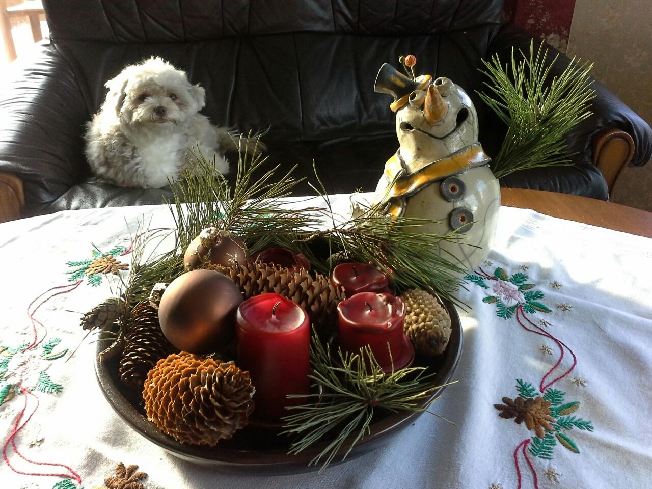 Weihnachtsfoto mit ihrem kleinen Hund  auf dem Sofa von Genossin Heike Völschow, Fraktionsvorsitzende DIE LINKE der Stadtvertretung Ribnitz-Damgarten.