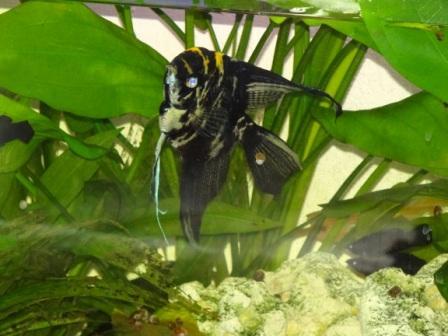 Blick mit der Kamera in ein Aquarium. Foto: Eckart Kreitlow